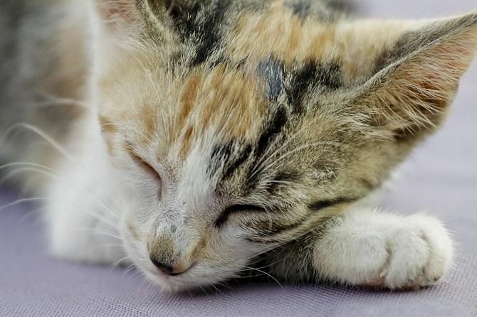 כמה שעות צריך לישון חתול