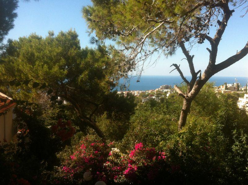 נוף של ים ועצים ירוקים